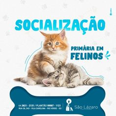 SOCIAL MEDIA - PET on Behance Social Media Ad, Social Media Design, Email Design, Ad Design, Pet Branding, Animal Posters, Advertising Design, Animal Design, Pet Shop