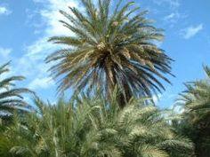 ONTDEK ZELF KRETA - Plants, Planters, Plant, Planting