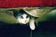 Lov. Cat.