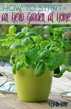 Interested in growing your own herbs at home? I'm sharing some tips and a free short eBook to get you started with your very own herb garden.