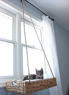 DIY Hanging Window Basket Cat Perch I made this hanging cat perch because I wanted something for my cat to look out the window that also looked good in my decor as well! My cat loves it and so do I! Cat Window Perch, Window Sill, Cat Window Hammock, Diy Cat Hammock, Diy Cat Bed, Sheila E, Cat Basket, Cat Room, Cat Decor