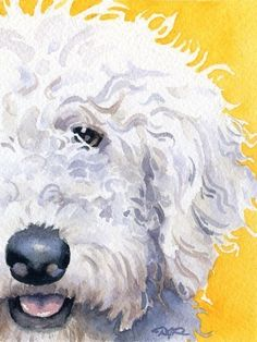 """LABRADOODLE"" ---- [Dog Signed Art Print]~[Artist David J. Rogers]'h4d'120831"