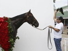 Some great behind-the-scenes photos from American Pharoah's Vogue shoot at Churchill Downs http://www.courier-journal.com/picture-gallery/sports/horses/triple/2015/06/15/american-pharoah-vogue-shoot-at-churchill-downs/71259650/…