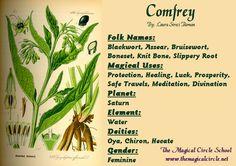 Comfrey Magical Properties - The Magical Circle School - www.themagicalcircle.net