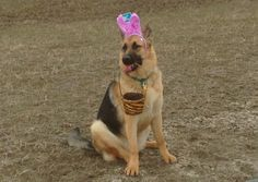 Easter Tekoa German Shepherd Dog 2014-03-30