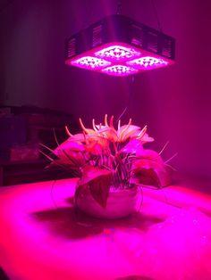 Elight240W-CREE LED-High Power Led Grow(Plant) Light | Led Grow Light