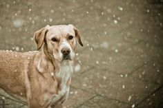 My dog, and snow <3
