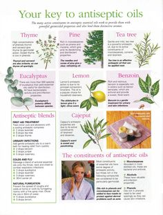 """CARD Your key to antiseptic oils (This is the back of the card entitled """"Aromatherapy antieptic oils"""") Healing Herbs, Medicinal Plants, Natural Healing, Young Living Oils, Young Living Essential Oils, Natural Medicine, Herbal Medicine, Herbs For Health, Aromatherapy Oils"""