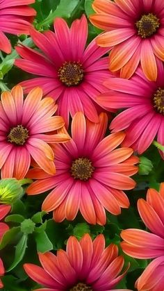 Flower Background Wallpaper, Flower Phone Wallpaper, Flower Backgrounds, Cellphone Wallpaper, Colorful Wallpaper, Nature Wallpaper, Wallpaper Spring, Wallpaper Desktop, Amazing Flowers