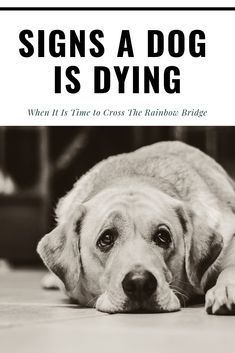Signs a Dog is Dying – When It Is Time to Cross The Rainbow Bridge - The Daily Tail Old Dog Quotes, Quotes Fighting, Rainbow Bridge Dog, Dog Shadow Box, Dog Passed Away, Dog Illnesses, Pet Remembrance, Dog Health Tips, Pets