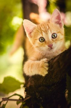 peekaboo - orange kitty -- by jurica puhanic on Cute Cats And Kittens, I Love Cats, Crazy Cats, Cool Cats, Kittens Cutest, Animals And Pets, Baby Animals, Chat Maine Coon, Photo Chat