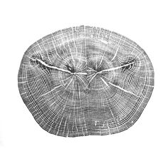 love these tree prints @ http://www.ashesandmilk.com/paper/