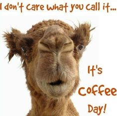 Wednesday Coffee Memes # wednesday Humor 60 Wednesday Coffee Memes, Images & Pics to Get Through the Week Coffee Meme, Coffee Talk, I Love Coffee, Coffee Quotes, My Coffee, Coffee Beans, Funny Coffee, Coffee Shop, Coffee Today