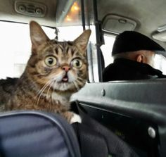 BUB's telling the cabby where to go.