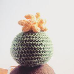 Happy Saturday ⭐️⭐️⭐️ #handmade #MissPumpkin #crochet #cactus #crochetcactus #cactusaddict #lovecactus #greencactus