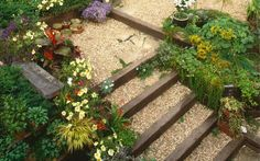 Article: How to plant a steep, sunny bank. Advice from RHS. With plant suggestions