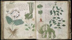 La editorial española Siloé clonará el 'Códice Voynich' de la Universidad de Yale, el mayor enigma editorial de la Edad Media