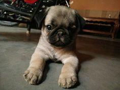 Jenny cute Dogs, Cute, Animals, Animales, Animaux, Pet Dogs, Kawaii, Doggies, Animal