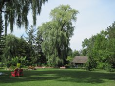 Botanical Gardens, Toronto, Lawn, Golf Courses, Kids Room, Space, Birthday, Floor Space, Room Kids