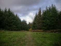 https://flic.kr/ps/2sS94s | Glyn Ruell's photostream | Latest Photos Added #photography #flickr #mortimersforest