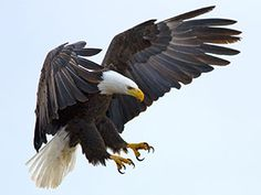 Eagle Feathers at Center of Tribal Leaders' Court Battle - US - CBN News - Christian News 24-7 - CBN.com