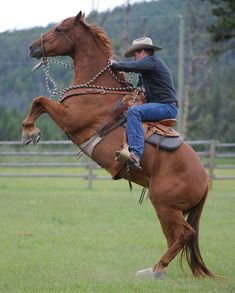 Reform a Rearing Horse-- very helpful! Next horse will be a mustang; never know what you're gonna get!