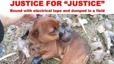 """Sponsorisez Prosecuting Crown Attorney of Ontario Court of Justice: JUSTICE FOR """"JUSTICE"""", LITTLE DOG BOUND WITH ELECTRICAL TAPE AND DUMPED IN A FIELD"""