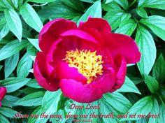 Spiritual Awakening Quotes, Spirituality, Flowers, Spiritual, Royal Icing Flowers, Flower, Florals, Floral, Blossoms