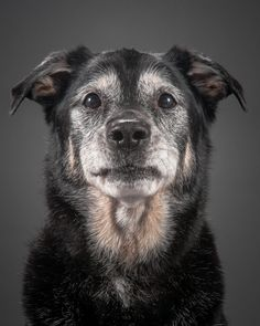Tales from the Toronto-based photographer's book, Old Faithful: Dogs of a Certain Age