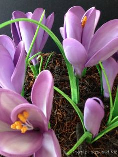A sure sign of the arrival of spring is seeing the crocuses - poking their way up through dead fallen leaves, faded mulch or even late fallen snow.  And, I love…