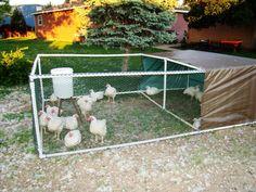 Easy DIY chicken run - PVC, tarp, plastic chicken wire, zip ties.