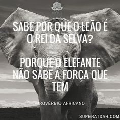 Acredite no seu potencial interno sempre! #superatdah  #superacao  #dda #tdah  #potencial  #elefante #tdah #adhd #dda #defict