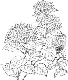 drawings of foxes Adult Coloring Pages, Printable Flower Coloring Pages, Colouring Pages, Coloring Books, Flower Line Drawings, Flower Drawing Tutorials, Flower Sketches, Art Drawings, Flower Pattern Drawing