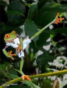 Karate Frog~♛... Sometimes I like to bust out my karate/kickboxing moves on old ladies. Is that mean?