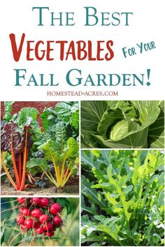 Vegetable Gardening For Beginners Growing a fall garden is the best! With so many less pests your garden naturally grows better in the fall. Check out this list of the best plants to grow in your fall vegetable garden! Fall Vegetables, Container Gardening Vegetables, Organic Vegetables, Growing Vegetables, Gemüseanbau In Kübeln, Pot Jardin, Home Vegetable Garden, Organic Gardening Tips, Garden Pests