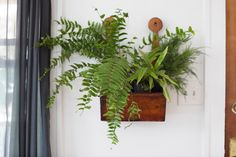 put plants in the brown long wooden shelf