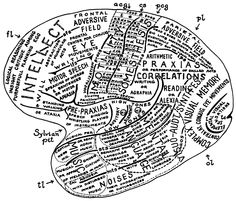 This fascinating (and visually appealing) brain map was created in 1957 by compiling virtually all that was known about the localization of brain's functions at the time. From: S. Polyak, The Vertebrate Visual System (The University of Chicago Press, 1957). Reproduced in: R.L. Savoy, History and future directions of human brain mapping and functional neuroimaging (Acta Psychologica 107, 2001, 9-42).