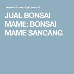 JUAL BONSAI MAME: BONSAI MAME SANCANG