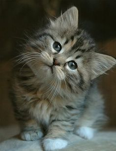 cute kitty head tilt