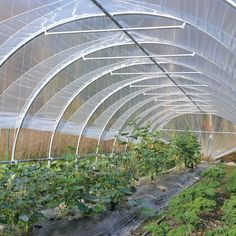 There is no more hurdle to know how to do greenhouse gardening? Greenhouse gardening is only possible in the best climatic conditions and weather variables. Greenhouse Film, Outdoor Greenhouse, Cheap Greenhouse, Greenhouse Interiors, Backyard Greenhouse, Greenhouse Wedding, Greenhouse Plans, Tunnel Greenhouse, Pallet Greenhouse