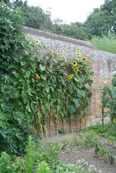 Terence Conran's sunflower adorned garden wall