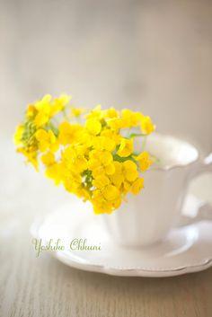 ♡ Yellow!