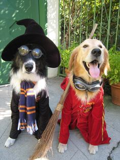 Once a year, every pet parent gets to dress their dogs in the most adorable, ridiculous, spooktacular costumes. We rounded up the best DIY dog costumes for Halloween. Harry Potter Dog Names, Harry Potter Dog Costume, Funny Dog Names, Funny Dog Pictures, Funny Dogs, Funniest Pictures, Animal Pictures, Chien Halloween, Halloween Mignon