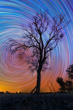 Star Trails with Lonely Tree