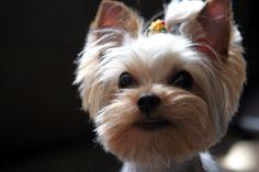 Tumi's puppy cut