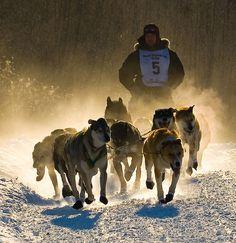 [Yukon, Canada] Mush! | Flickr - Photo Sharing! https://www.flickr.com/photos/legrisak/388861161/