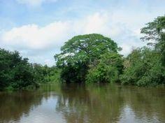 Caño Negro Wildlife Refuge-Caño Negro National Wildlife Refuge, Alajuela