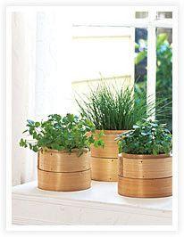 bamboo steamer herb garden