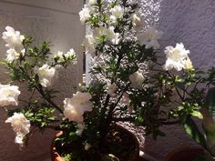 Las flores de la mamá, brillan como ella