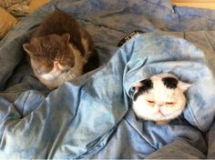 Restlessness and total inability to sleep the night before the big day   Buzzfeed: All The Feels That Happen During Graduation Week, As Told By Cats... Congrats to the Class of 2014 from RateMyProfessors.com!